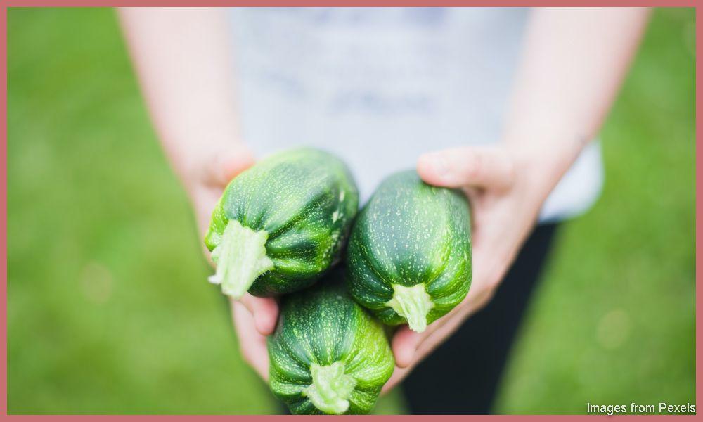 How to Start Vegetable Garden Business
